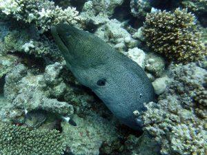 Fisch-aegypten